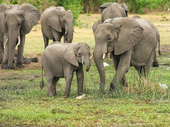 В Индии назвали причину массовой гибели слонов в заповедном лесу