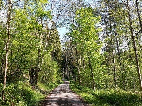 Вильфанд назвал прошедший май в России одним из самых теплых