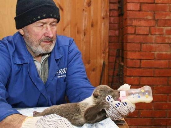 Умер основатель центра спасения медвежат-сирот Владимир Пажетнов