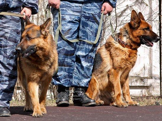ФСИН развеяла мифы о роли служебных собак: материнский инстинкт сильнее служебного