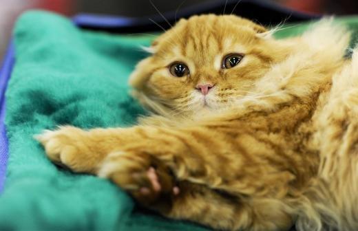Кошку из петербургской библиотеки признали лучшей служебной кошкой России