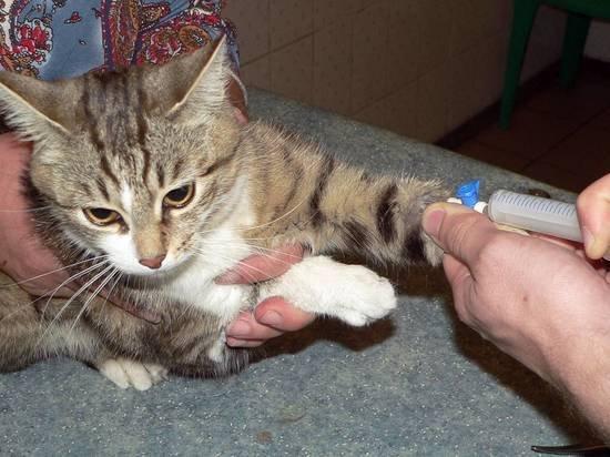 Кошки могут заразиться COVID-19 через постель хозяина