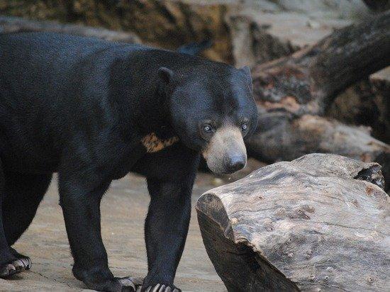 В зоопарке Окленда начали вакцинировать животных от COVID-19