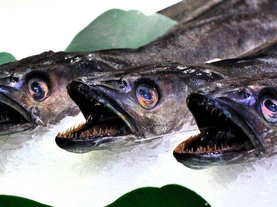 Названы пять признаков рыбы, которую нельзя есть