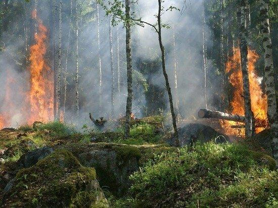 Оценена вероятность появления в Москве смога лесных пожаров