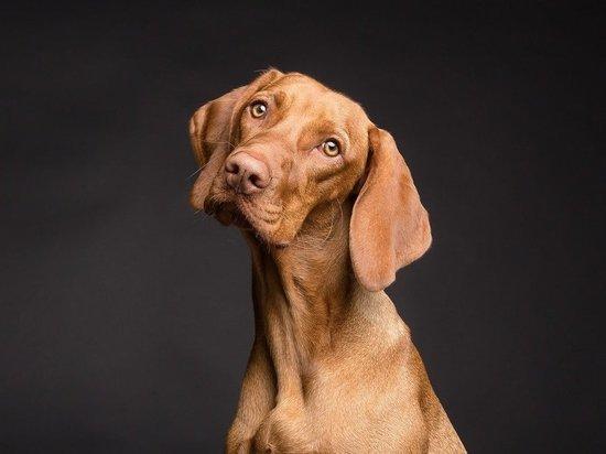 В США вступил в силу запрет на ввоз собак из России