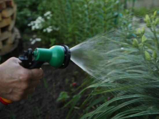 Дачникам России рассказали, как спасти огород в жару
