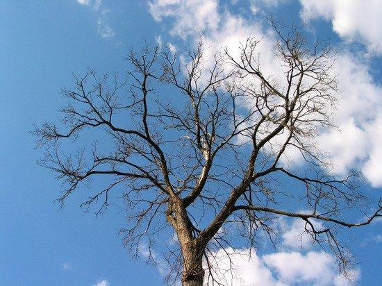 Минстрой решил облегчить вырубку деревьев при строительстве