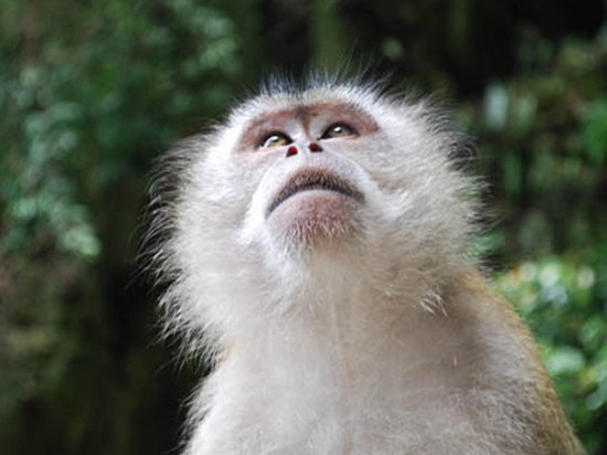 Американцев напугала обезьянья оспа: страшнее ковида