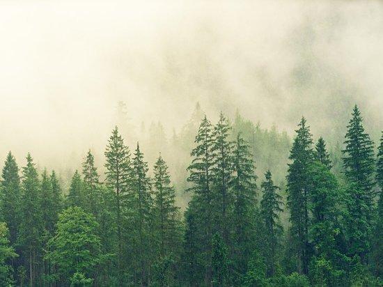Генсек ООН призвал страны G20 достичь нулевого уровня выбросов к 2050 году
