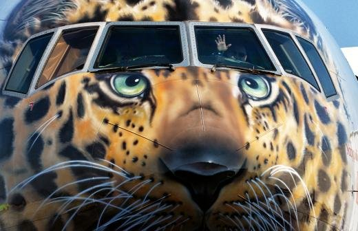 «Аэрофлот» проработает увеличение нормы провоза животных в салоне с 8 до 10 кг