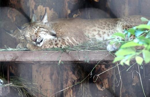 В Московском зоопарке родились птенцы редкой большой дрофы