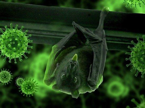 Исследователь ВОЗ назвал новую версию передачи коронавируса человеку