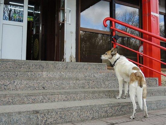 Зоозащитников возмутило разрешение на вход с собаками в магазины