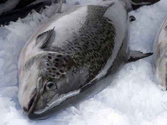 Из-за чиновников реки Поморья наводнила вредная рыба