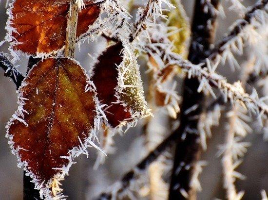 В Центральную Россию идут заморозки