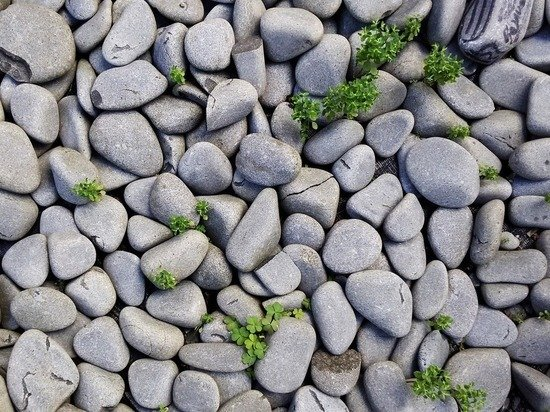 В премьер-министра Канады Трюдо неизвестные бросили несколько камней