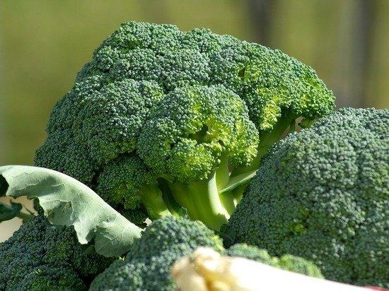 Доктор Мясников раскрыл особую пользу брокколи: «Царь здорового питания»