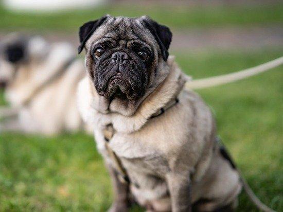 Названы топ-10 пород собак для маленькой квартиры
