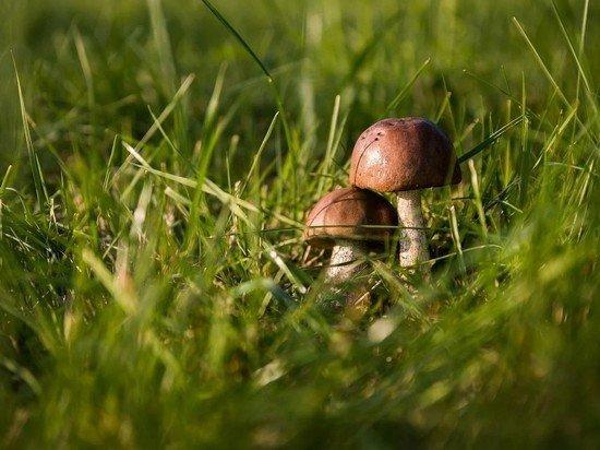Россияне начали бронировать грибы в лесу