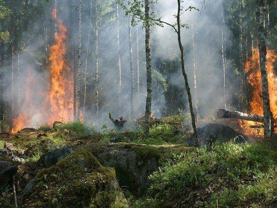Greenpeace: площадь лесных пожаров в 2021 году побила рекорды
