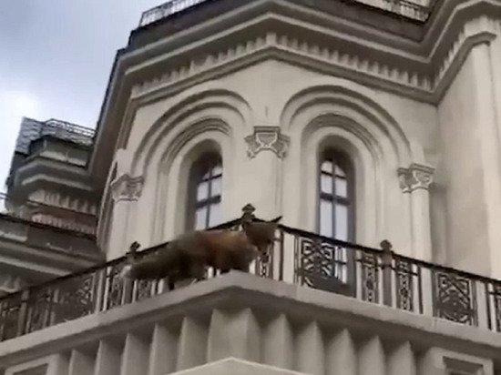 Лиса распугала прихожан Сретенского монастыря в Москве