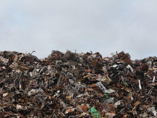 Эколог рассказал, как на природу влияют выброшенные смартфоны
