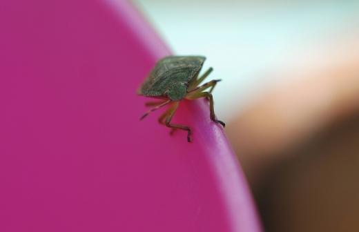 Нашествие комаров наблюдается в Анапе из-за подтоплений