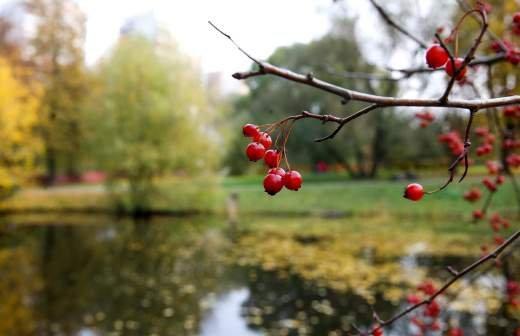Гидрометцентр объяснил холодное начало осени в Москве