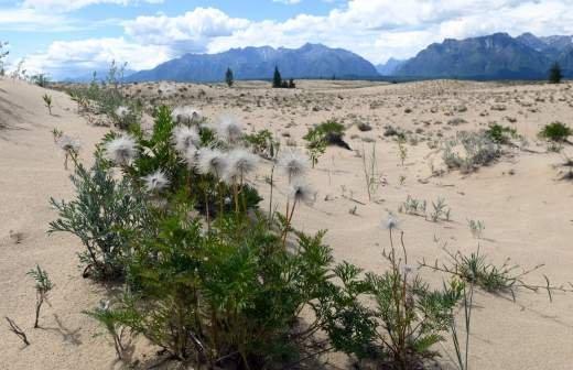 В Чувашии ввели режим ЧС из-за засухи