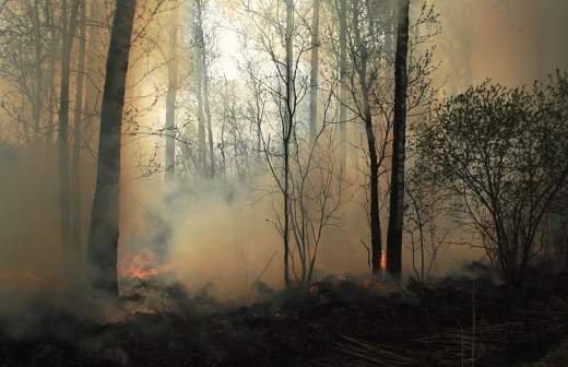 В МЧС назвали причину пожара на заимке у отшельницы Агафьи Лыковой