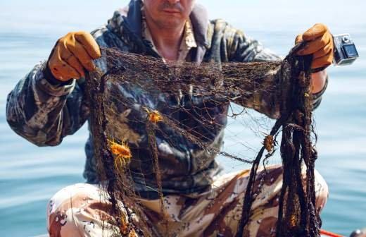 В Амурском заливе нашли выделяющие нейропаралитический яд водоросли