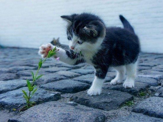 Британские ученые прояснили роль охоты в жизни кошек