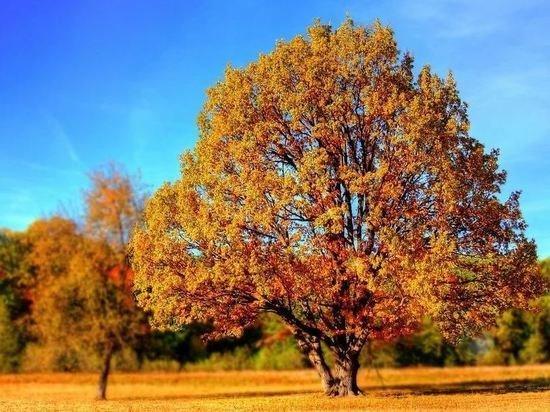 Названы способы борьбы с плохим настроением осенью