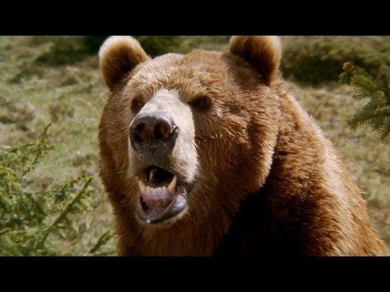 Американка попала в тюрьму за селфи с медведями в нацпарке