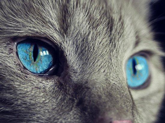 Из музея Анны Ахматовой в Петербурге похитили кота