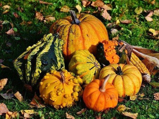 Размер мини: почему для Хэллоуина огородники выращивают карликовые тыквы