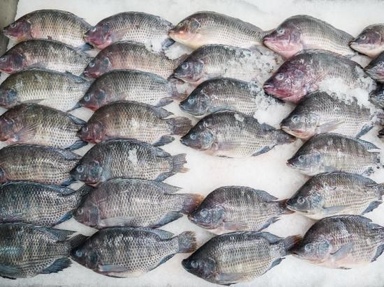Названа рыба, от которой появляется жир на животе