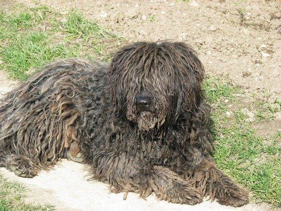 Названы топ-5 самых смешных и необычных пород собак