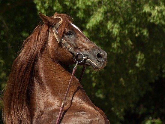 Бойцу Минееву подарили коня за победу над Исмаиловым