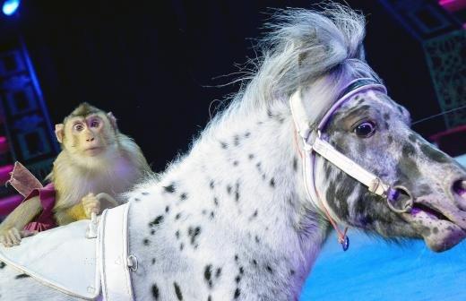 В орловском цирке назвали версию нападения медведя на дрессировщицу